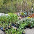 Pre-Plant-Sale
